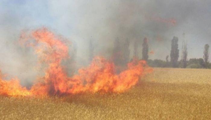 Почти миллион рублей штрафов должны заплатить поджигатели травы в Алтайском крае