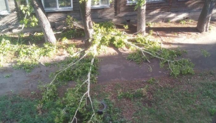 Дерево упало на мать с дочкой: на Алтае разгребают последствия разгула стихии