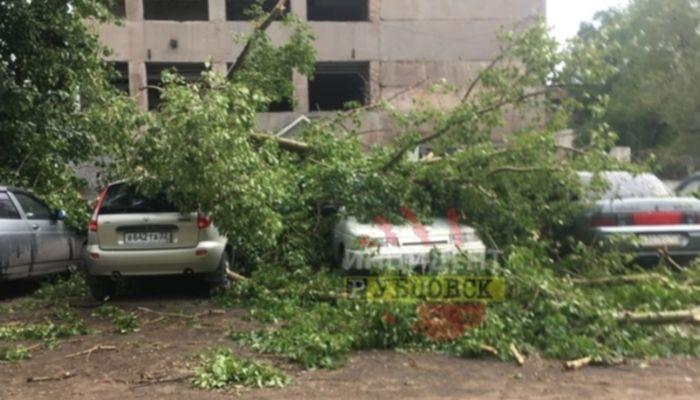 В Рубцовске ураганный ветер повалил деревья на машины