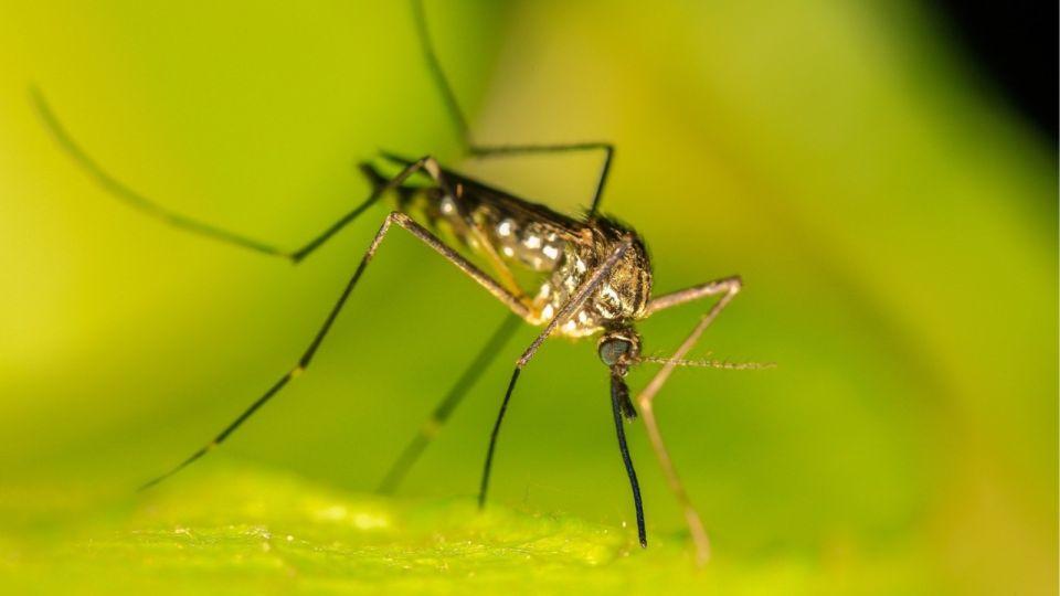 Как избавиться от комаров дома или на даче дешевыми народными средствами