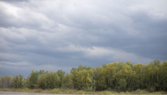 Ветер, грозы и жара: штормпрогноз объявлен в Алтайском крае