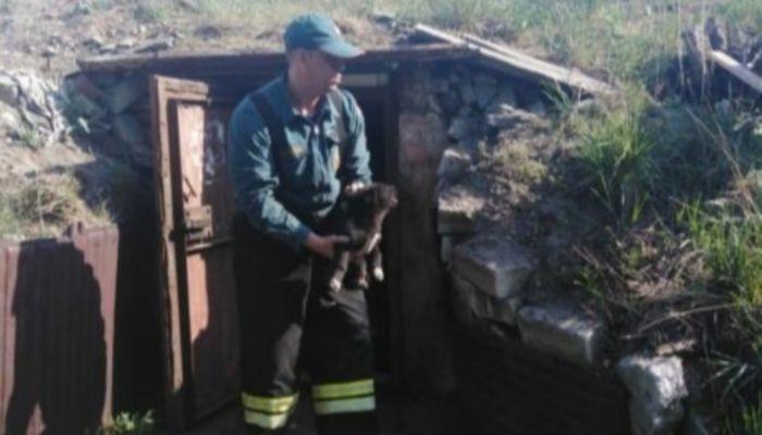 В Камне-на-Оби сотрудники МЧС спасли провалившихся в погреб щенят