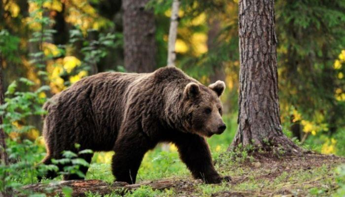 Голодный медведь набросился на мужчину в центре Ярославля
