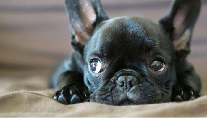 Ко мне!: какие прививки нужны щенкам и когда проводить вакцинацию