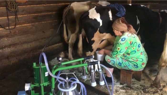 Забастовка продолжается: в алтайских селах не отдают молоко за бесценок