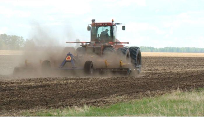 Есть большая напряженность: алтайские аграрии бьют тревогу из-за засухи