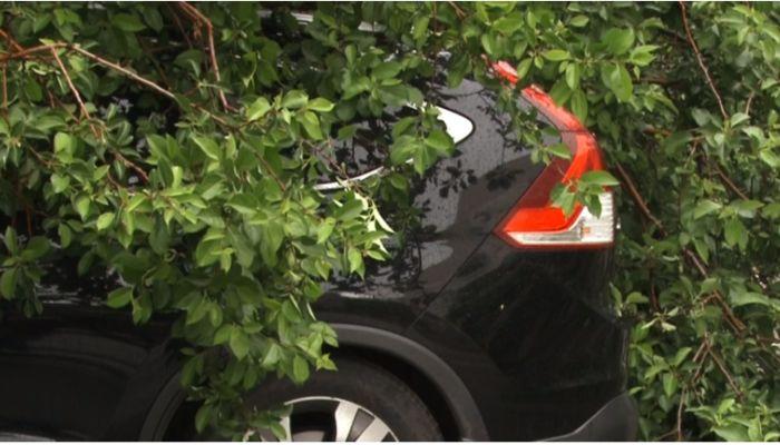 В центре Барнаула дерево упало на припаркованные машины