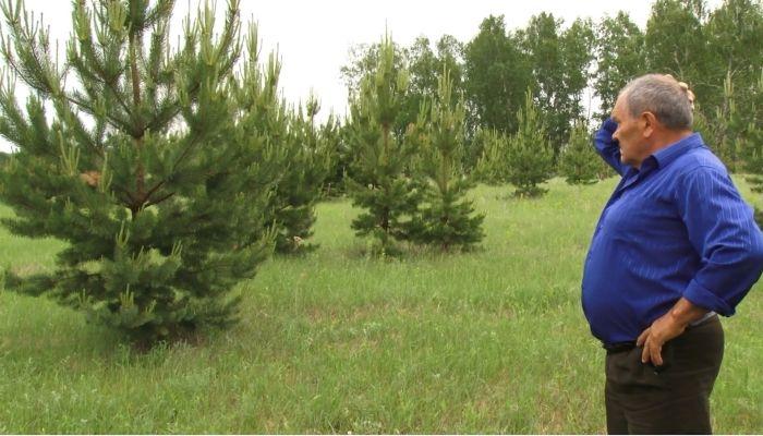 Житель Шелаболихинского района высадил около 10 тысяч деревьев