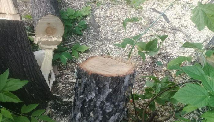 Пилят все подряд: жители Новоалтайска жалуются на реконструкцию сквера