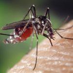Как выбрать репелленты от комаров и почему эфирные масла не помогают