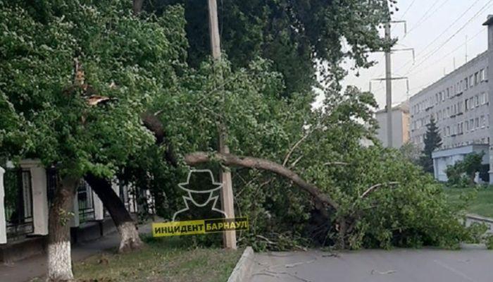 Падали деревья, рвались провода: последствия сильного ветра устранили в Барнауле