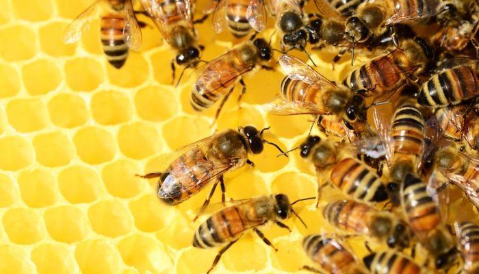 Приложение за миллион рублей для алтайских пчеловодов запустят с 1 июня