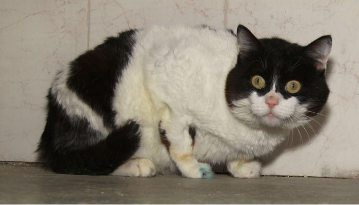 Ко мне!: как нужно правильно ухаживать за котами