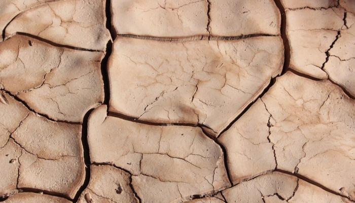 1,8 млн гектаров посевных площадей в Алтайском крае страдают от острой засухи