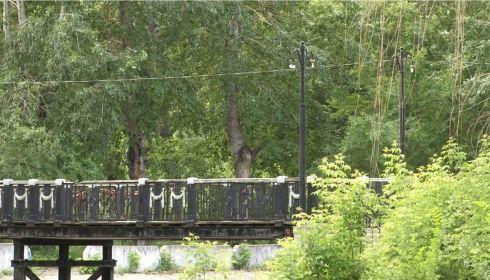 Управляющий парком Изумрудный объяснил ситуацию с пожухшими деревьями
