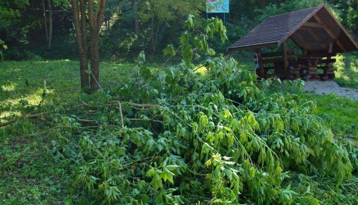 Жители Белокурихи возмущены масштабными рубками на известном терренкуре
