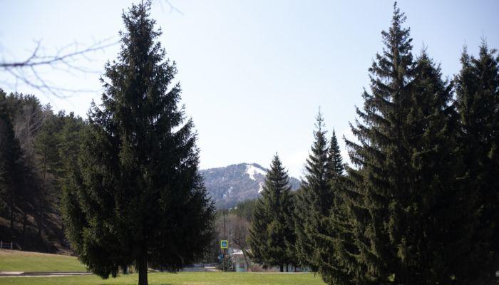 Дорогу к Мишиной горе в Белокурихе построят почти за полмиллиарда рублей