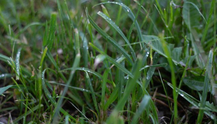Дождливо и прохладно: о погоде на 10 июня в Алтайском крае