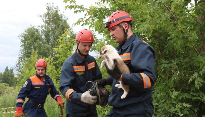 В Барнауле сотрудники МЧС спасли четверых щенят, попавших в западню