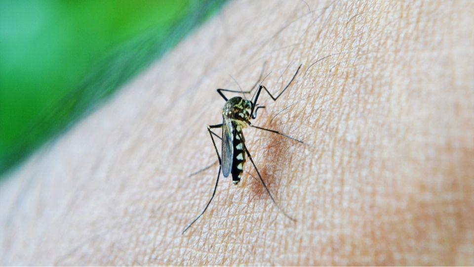 Жители Рубцовска жалуются, что город не обрабатывают от комаров и мошек