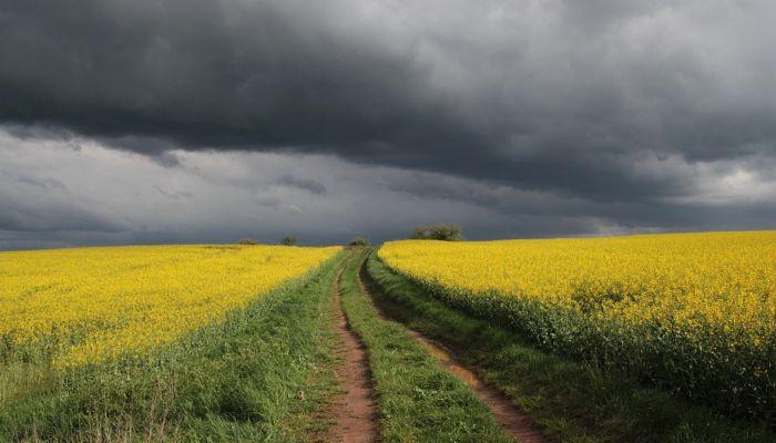 Синоптики предупредили о сильных дождях с градом 18 июня в Алтайском крае