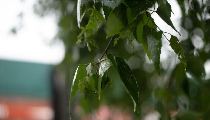 На Алтайский край обрушатся град, ливни и порывистый ветер