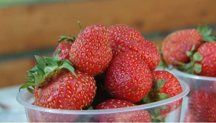 Раньше срока: повлияла ли жаркая погода на урожай и стоимость ягод на Алтае