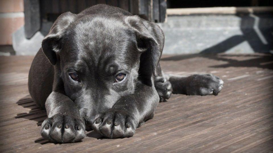 Общественники хотят построить новый приют для собак в Рубцовске