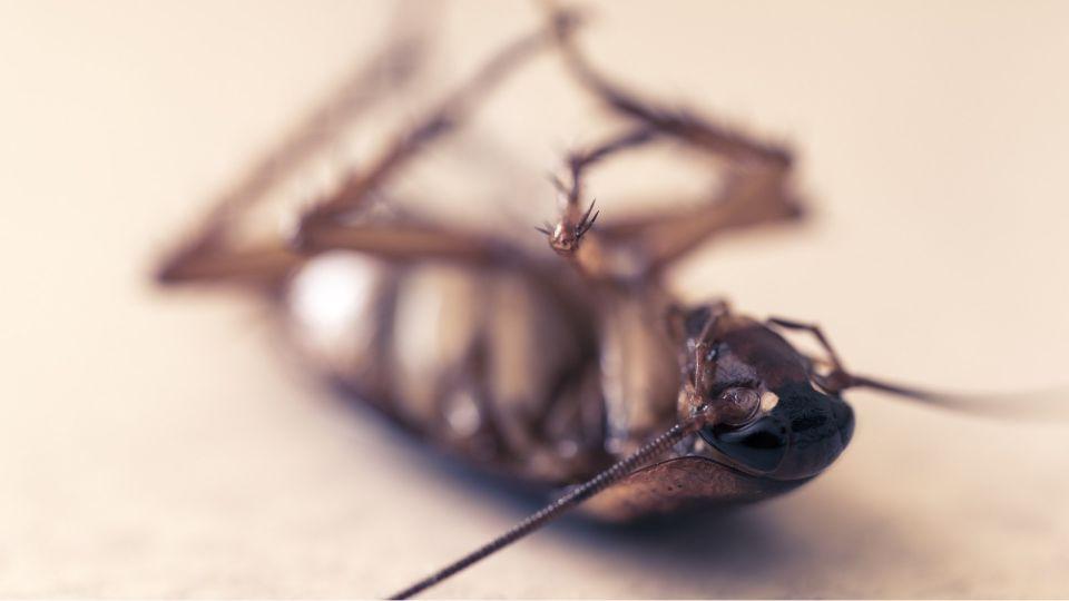 Мыши и насекомые атаковали многоквартирный дом в центре Барнаула