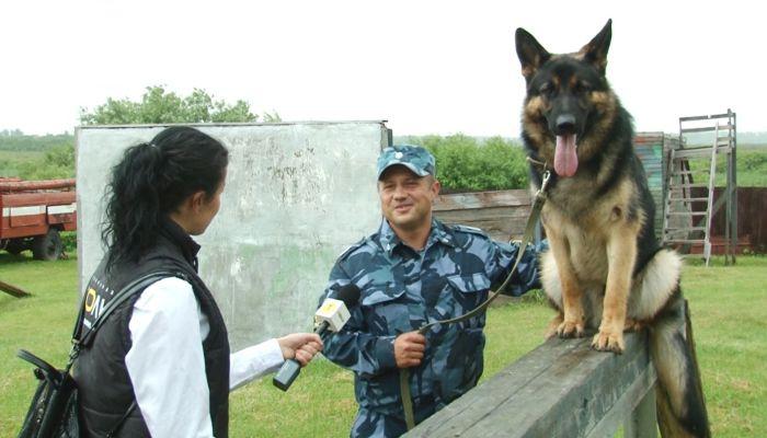 День кинолога: специалисты рассказали, как воспитывать служебных собак