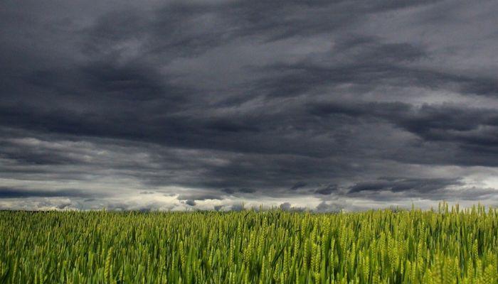Штормпрогноз: грозы, град и дожди обрушатся на Алтайский край