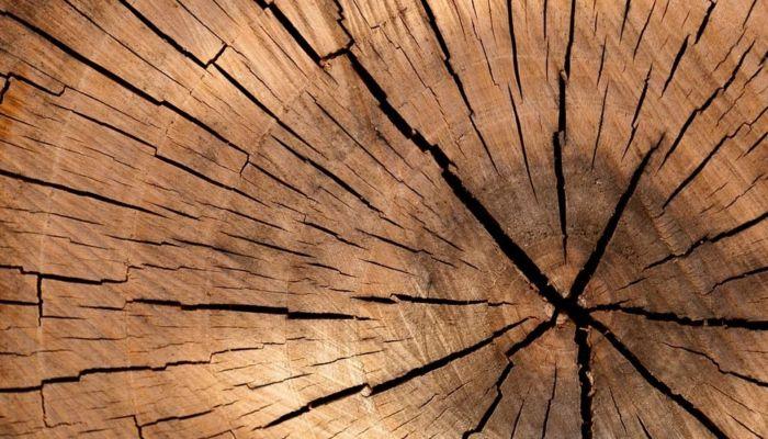Алтайская прокуратура попыталась отменить двойную компенсацию за спил деревьев