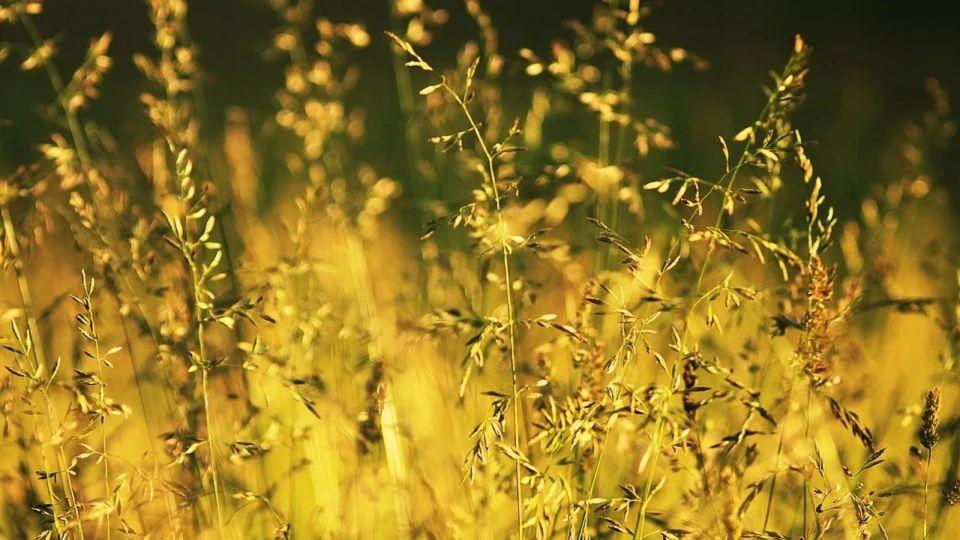 Тепло. Трава