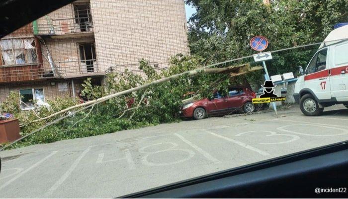 В Барнауле сломалось дерево и упало на крышу автомобиля