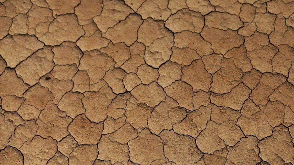 Режим ЧС могут ввести из-за засухи в Алтайском крае