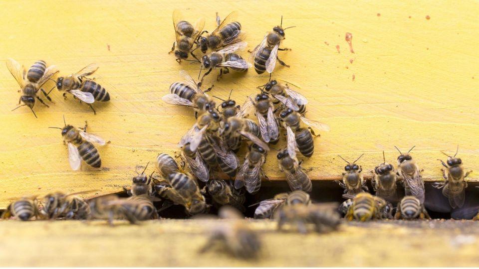 Пчёлы. Пасека