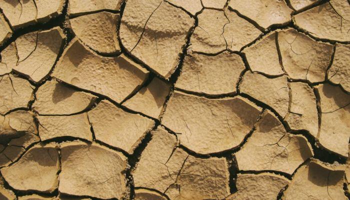 Режим ЧС введут в некоторых районах и городах Алтайского края из-за засухи