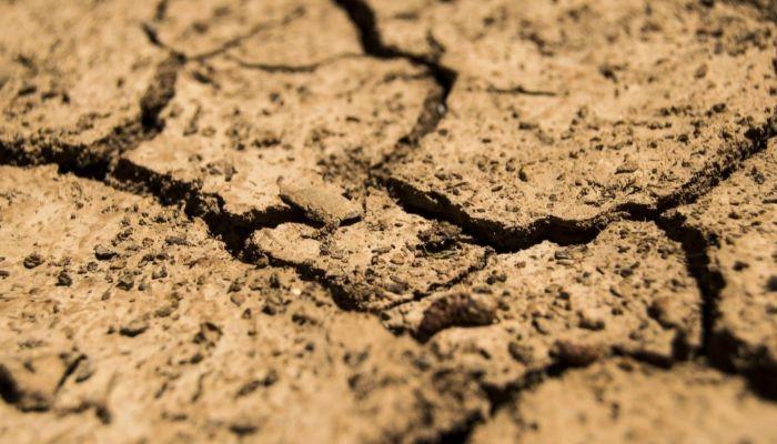 Теперь официально: в Алтайском крае введен режим ЧС из-за засухи