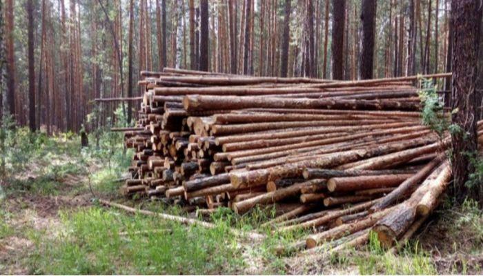 Холдинг Алтайлес наказали за нарушения при заготовке древесины