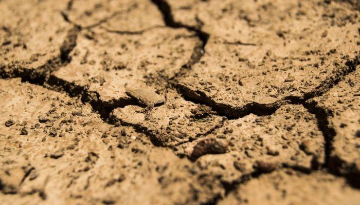 Гибнут посевы: глава алтайского минсельхоза назвал уникальной засуху 2020 года
