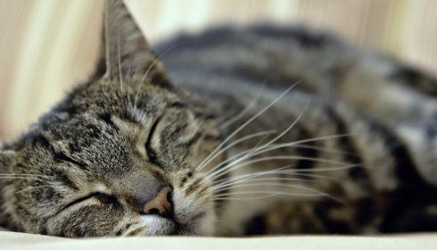 В Барнауле может появиться кладбище домашних животных