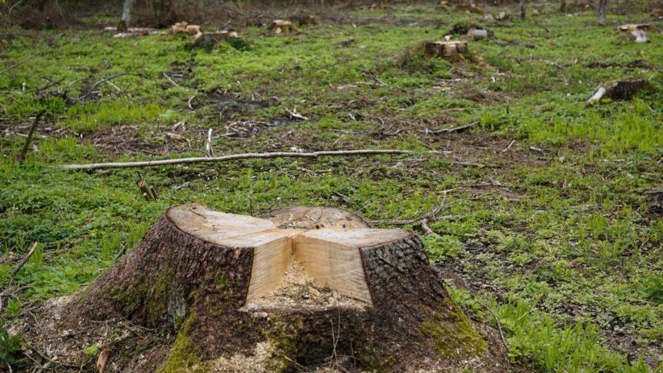 Следком разберется с вырубкой леса под частную застройку в Барнауле