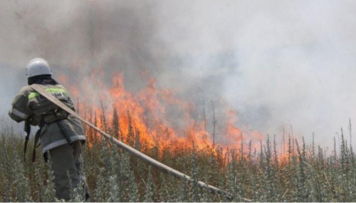 В Алтайском крае выгорело в пять раз больше леса, чем в прошлом году