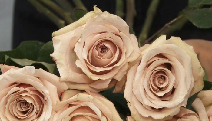 День флориста: сложно ли создавать цветочные шедевры