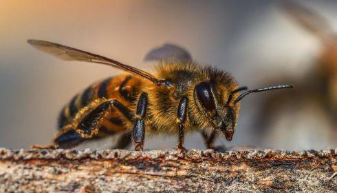 Страшнее дуста. Под Барнаулом потравили поля от вредителей, а заодно и от пчел
