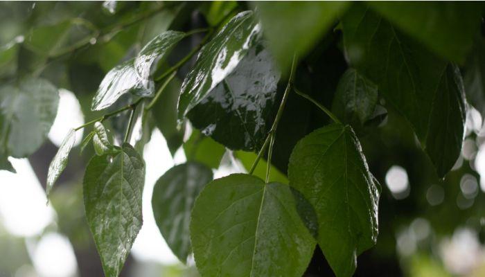 Заливает: сильные дожди пришли на смену засухе в Алтайском крае