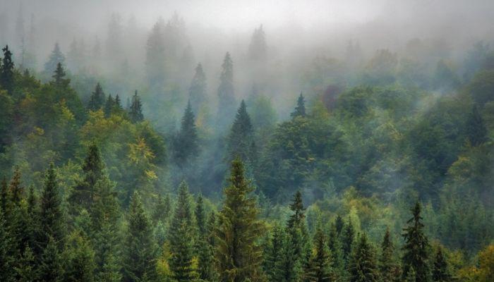 На пользу лесам и озерам: как на Алтае реализуется нацпроект Экология