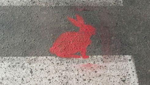 Кто и зачем рисует розовых кроликов на асфальте в Новосибирске