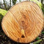 Кто и зачем рубит лес: правда и мифы о лесозаготовках, идущих в Алтайском крае