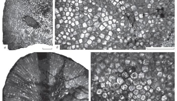 Ученые обнаружили на Алтае ископаемые возрастом более 450 млн лет